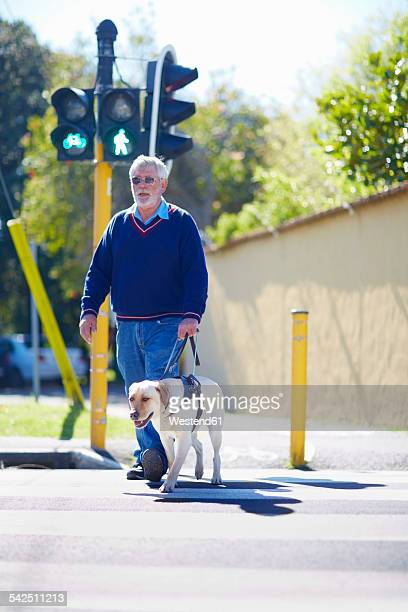 visually impaired man crossing a street with his guide dog - 盲導犬 ストックフォトと画像