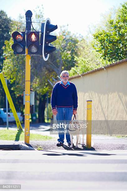 visually impaired man waiting with his guide dog at pedestrian light - road signal stock pictures, royalty-free photos & images