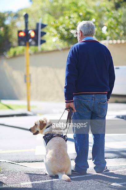 Visually impaired man waiting with his guide dog at pedestrian light