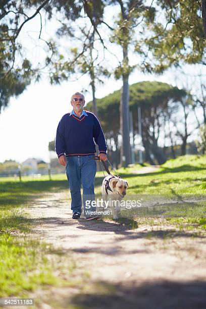 visually impaired man walking with his guide dog in a park - 盲導犬 ストックフォトと画像