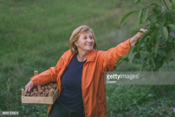 Vitale femme senior, ramasser les noix dans son verger