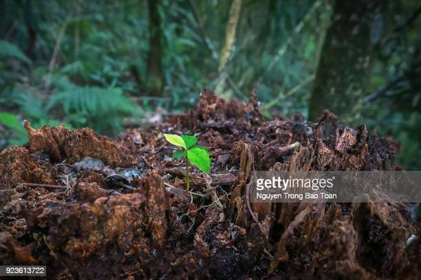 vitality of seedlings - sapling stock photos and pictures