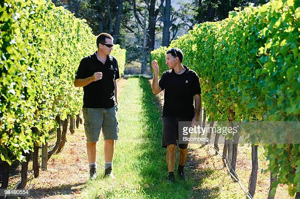 Viticulturist Mike Croad left and wine maker George Geris discuss the readiness of Villa Marias Estate Ltd's Sauvignon Blanc grapes in Marlborough...