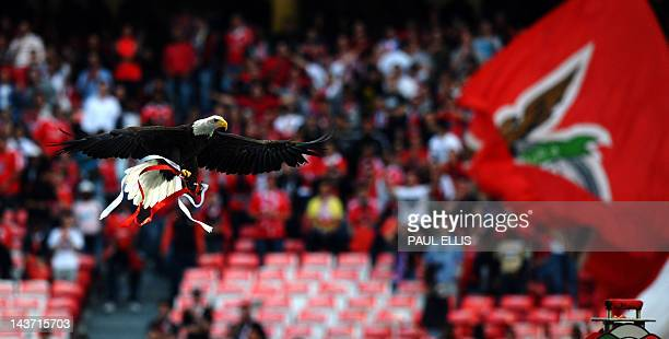 Vitoria Benfica's mascot a North American bold eagle flies around the stadium before the UEFA Champions League football match between Benfica and...