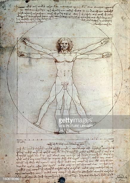 Vitruvian Man by Leonardo da Vinci pencil and ink on paper 34x24cm