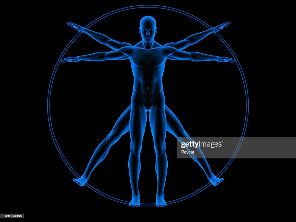 Vitruvian man : Stock Photo