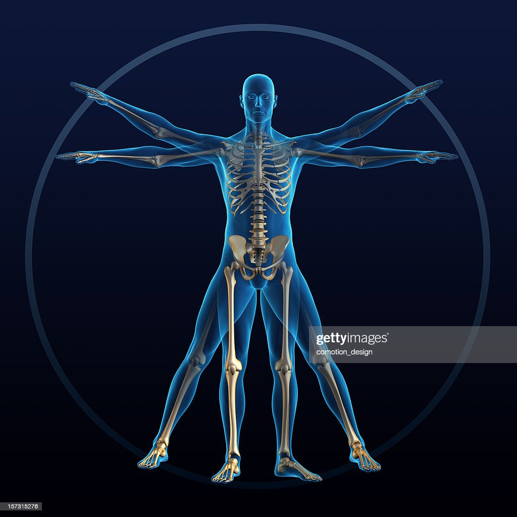 Vitruvian man : Stock Photo