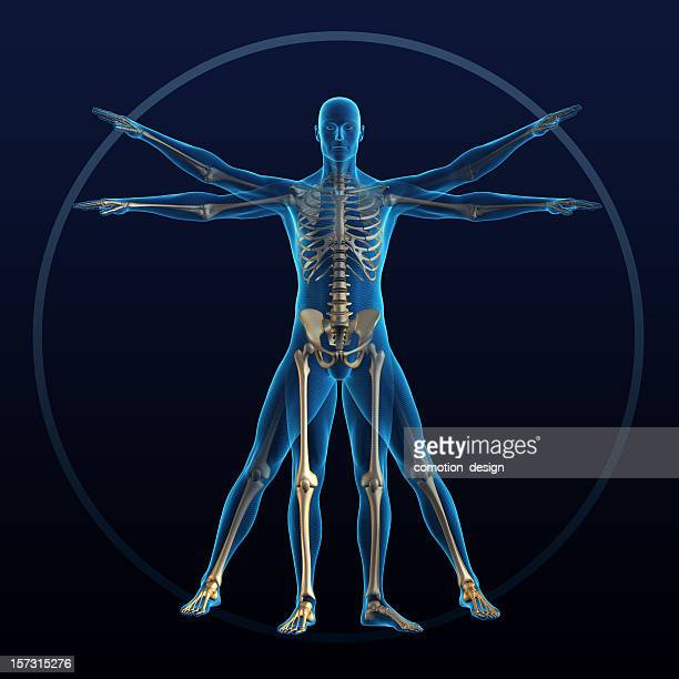 vitruvian man - the human body stock pictures, royalty-free photos & images