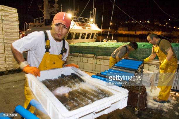 Viveiro Lugo Galicia Spain An indonesian fisherman with two galician companions in the fishing ship Great Sun Candorca dischargeing thorn hake boxes...