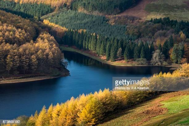 vivid autumn colour at derwent reservoir, peak district national park - laubbaum stock-fotos und bilder