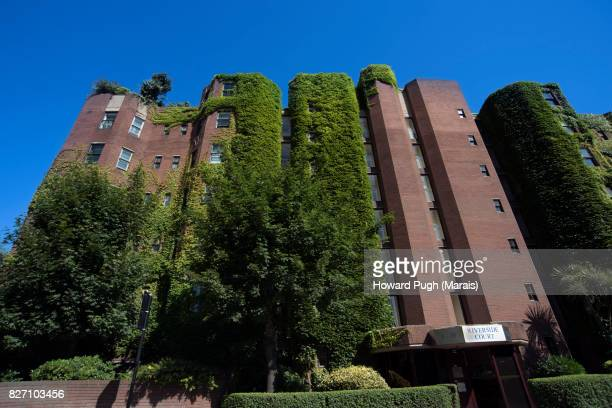 Vivid Blue Sky, Lush Green Designer Foliage And An Upwardly Converging Apartment Exterior