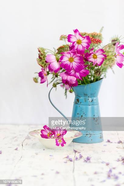 vivid cosmos in old watering can - cosmos flower stock pictures, royalty-free photos & images