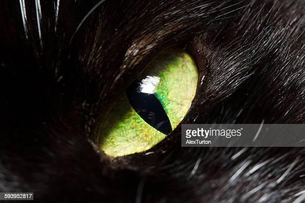 vivid green black cats eye
