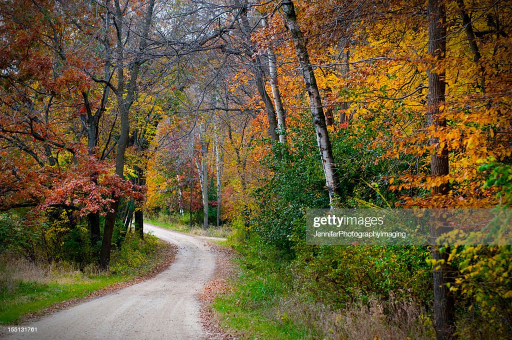Vividly colored picture of dirt road in forest during Autumn : Stock Photo