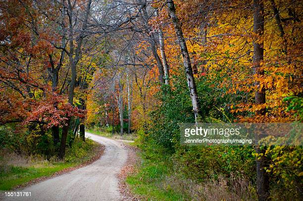 vividly colored picture of dirt road in forest during autumn - illinois stock photos and pictures