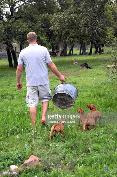 vizsla puppies following the pail - たらい ストックフォトと画像
