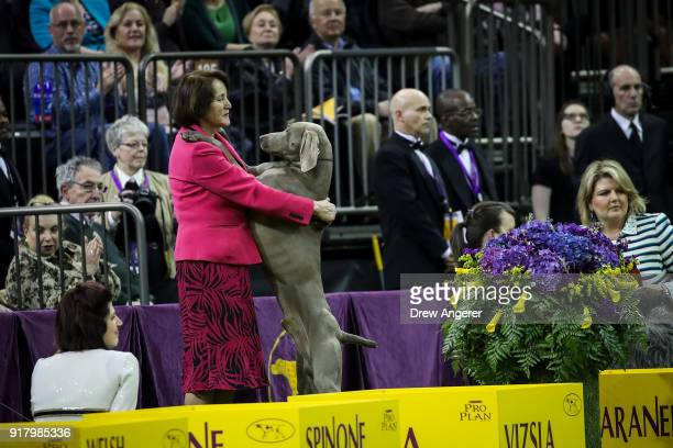 Vizsla stands on its hind legs on the sidelines during sporting group competition on the final night of the 142nd Westminster Kennel Club Dog Show at...