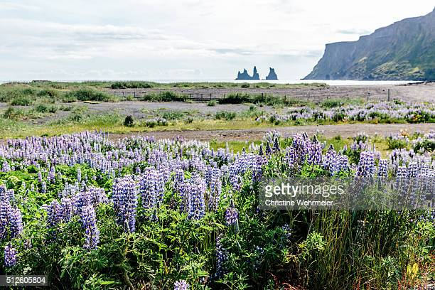 vík í mýrdal, southern iceland in summer - christine wehrmeier stock pictures, royalty-free photos & images