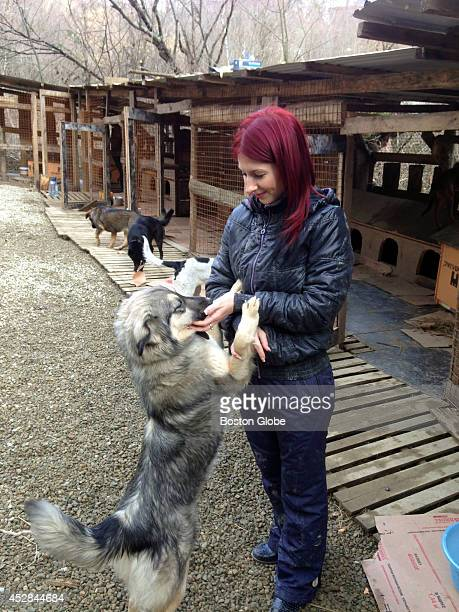 Vlada Provotorova a dentist who lives and works in Sochi picks up stray dogs from the streets and brings them to makeshift kennels where she and...