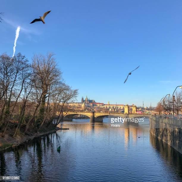 vltava river in a sunny afternoon, prague, czech republic - vsojoy stockfoto's en -beelden
