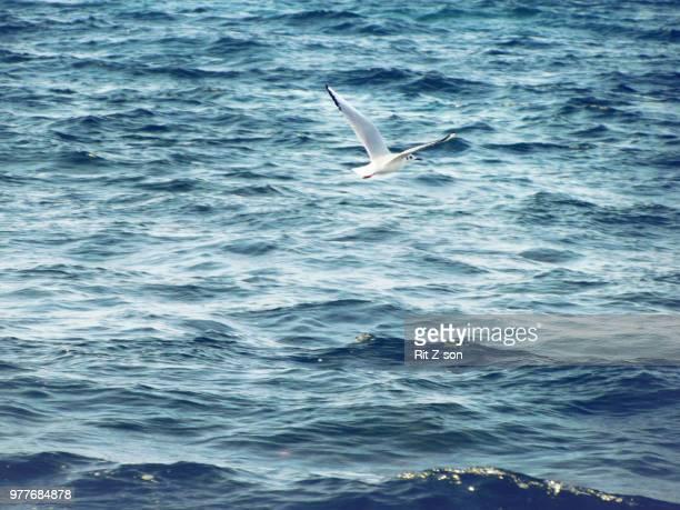 volar hacia la libertad - son la stock pictures, royalty-free photos & images