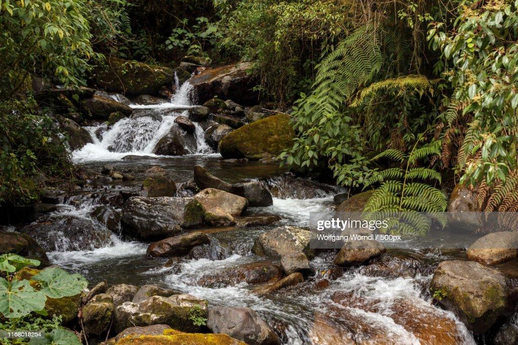 Volcan Baru National Park : Stock-Foto