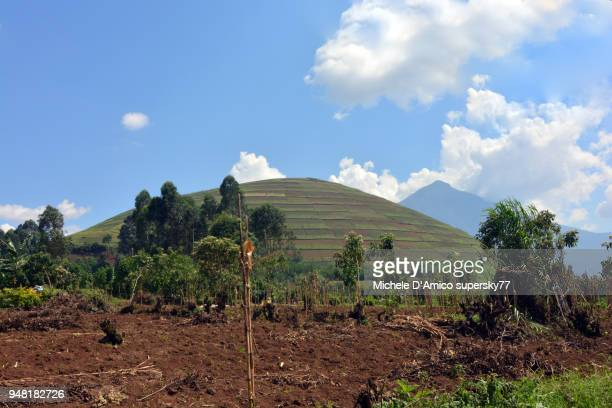 Volcanic landscape in Kisoro, with steep cultivated volcanic cones and the Virunga