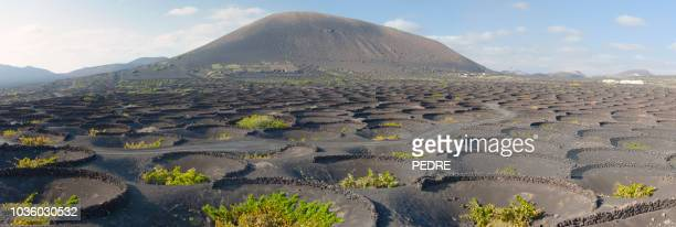 volcanic wine valley of la geria - lanzarote stock pictures, royalty-free photos & images