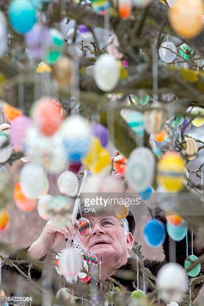 Volker Kraft decorates his apple tree with easter eggs on March 18 2013 in Saalfeld Germany Kraft decorates his tree with easter eggs every year AFP...