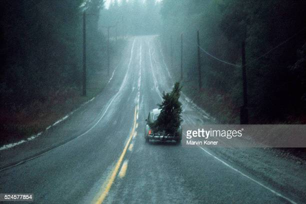 A Volkswagen Beetle hauls a Christmas tree on a road in Vashon Island