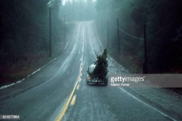 A Volkswagen Beetle hauls a Christmas tree along a quiet road in Vashon Island Washington circa 1955