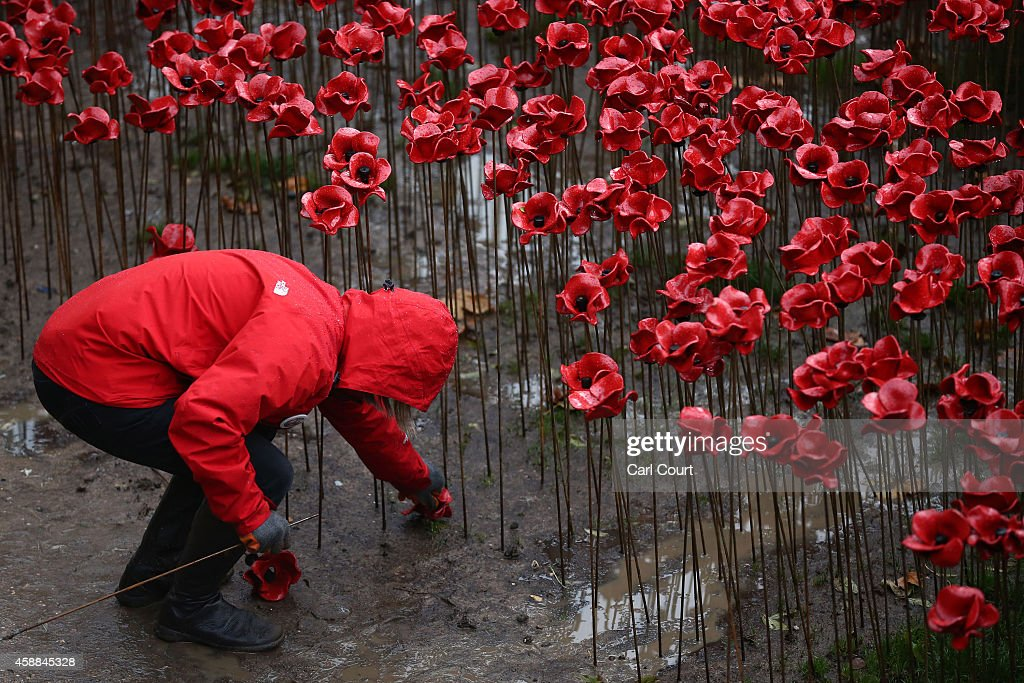 A volunteer begins removing 888,246 hand-made poppies, representing each of the commonwealth servicemen and women killed in the first world war at Tower of London on November 12, 2014 in London, England. Around five million people are thought to have visited the artwork entitled 'Blood-Swept Lands and Seas of Red' by artist Paul Cummins and Tom Piper and removal is estimated to take 8,000 volunteers around two weeks.