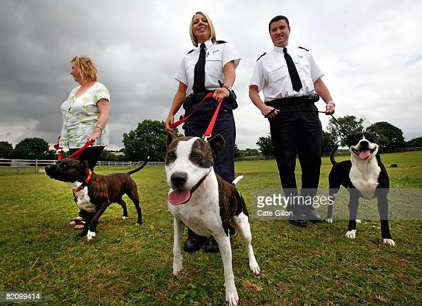 Volunteer Denise Winters with dog Dennis RSPCA Inspector Bartle with dog Saffron and RSPCA Inspector Simon Osborne with dog Warrier stretch their...