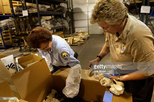 Volunteer Diane Buell and Wildlife Repository specialist Doni Sprague dismantle ivory figurines that will be part of an estimated 6 tons of...