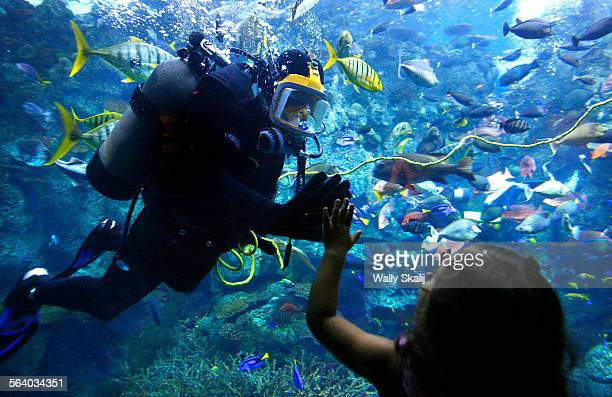 Volunteer diver Dirk Burcham waves to Sofia Ferguson at the Aquarium of the Pacific in Long Beach
