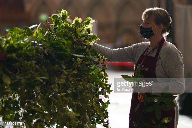 Volunteer flower arranger Mandy Barker makes finishing touches to the Advent wreath before it is raised into its traditional position below the...