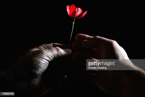 A volunteer hands out Poppies during an ANZAC day commemorative service at the Shrine of Rememberance on April 25 2007 in Melbourne Australia...