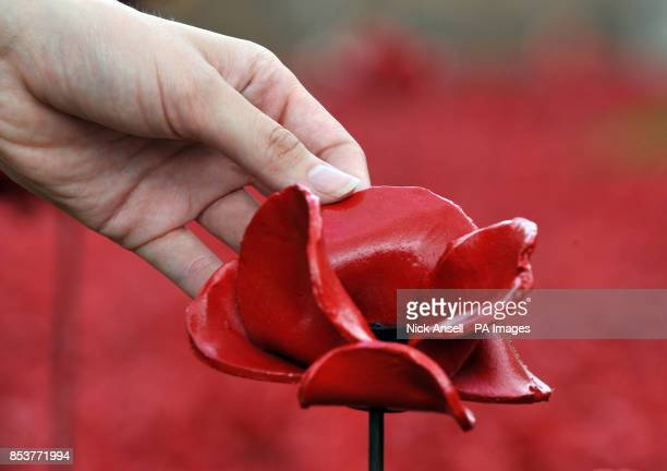 Volunteer holds a ceramic poppy as part of the art installation 'Blood Swept Lands and Seas of Red' by artist Paul Cummins at the Tower of London, as...