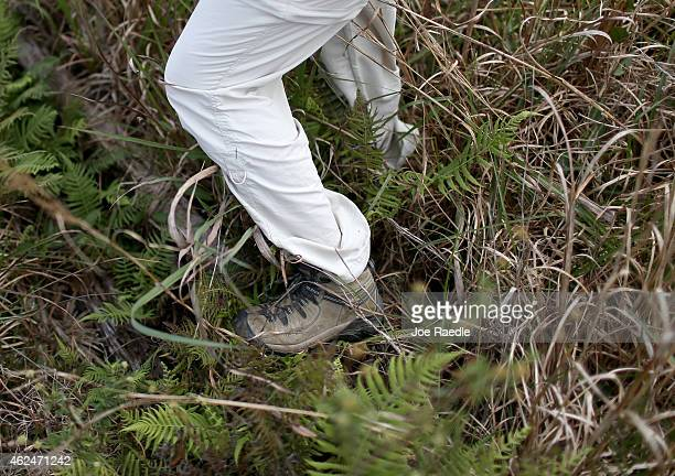 A volunteer hunts for Northern African rock pythons and other nonnative snakes in the Florida Everglades on January 29 2015 in Miami Florida The...