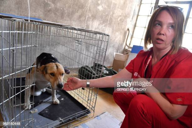 A volunteer of Clean Futures Fund calms a stray dog after it was operated in the improvised animals hospital just near the Chernobyl power plant on...