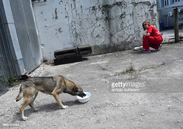 A volunteer of Clean Futures Fund feeds a stray dog outside the improvised animals hospital just near the Chernobyl power plant on June 8 2018 The...