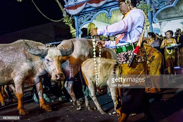 A volunteer of Kasunanan Surakarta known as 'Abdi Dalem' prepares White buffalos or kebo bule during the traditional night carnival '1st Suro'...