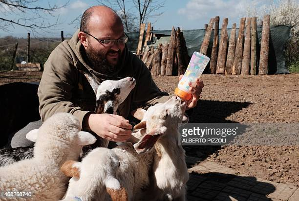 MACKINNON A volunteer of The Green Place an animal refuge bottle feeds a lamb and baby goats on March 31 2015 in Nepi Nearly 2000 years of culinary...