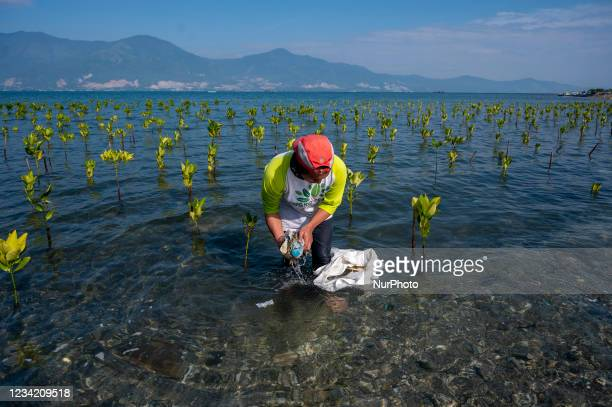 Volunteer picks up plastic waste in a mangrove conservation area on Dupa Bay Palu Beach, Central Sulawesi Province, Indonesia on July 26, 2021. The...