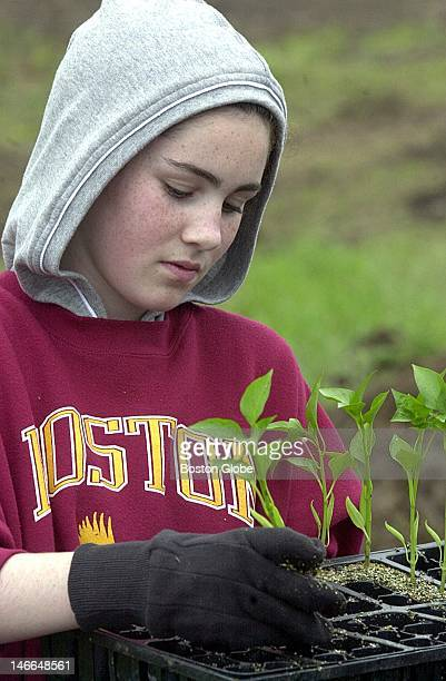 Volunteer Sarah Sutherland readies a pepper plant for planting The vegetables will be harvested and donated to area food banks It's part of the...