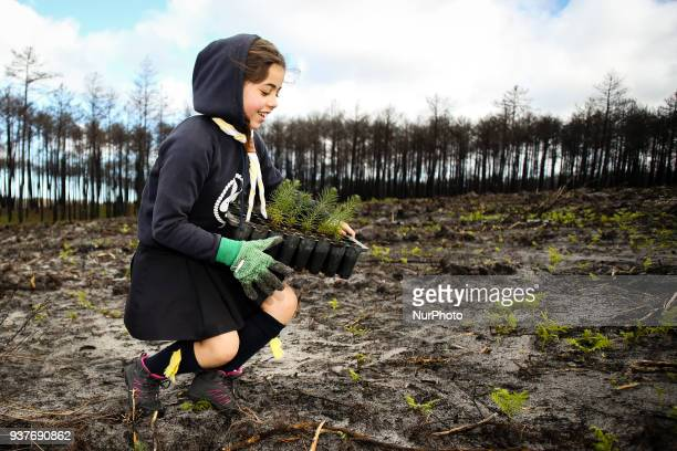 Volunteer takes part in the Reforestation of Pinhal de Leiria forest, counting with more than 67.500 Pine Trees that was donated, to be planted on...