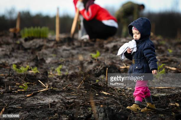 A volunteer takes part in the Reforestation of Pinhal de Leiria forest counting with more than 67500 Pine Trees that was donated to be planted on...