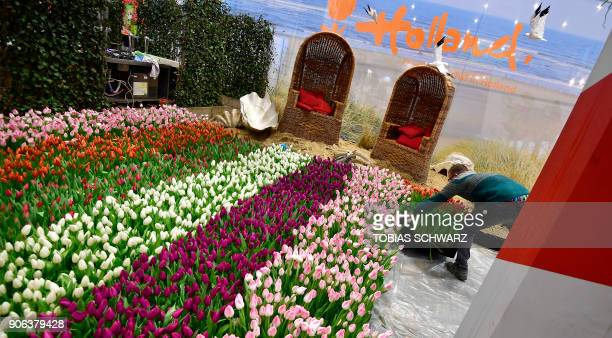 A volunteer waters tulips at the booth of the Netherlands before the opening day of the International Green Week agricultural fair in Berlin on...