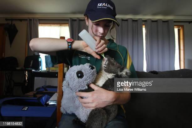 Volunteer wildlife carer Minka Macaule feeds an injured koala joey at the Kangaroo Island Wildlife Park in the Parndana region on January 08 2020 on...