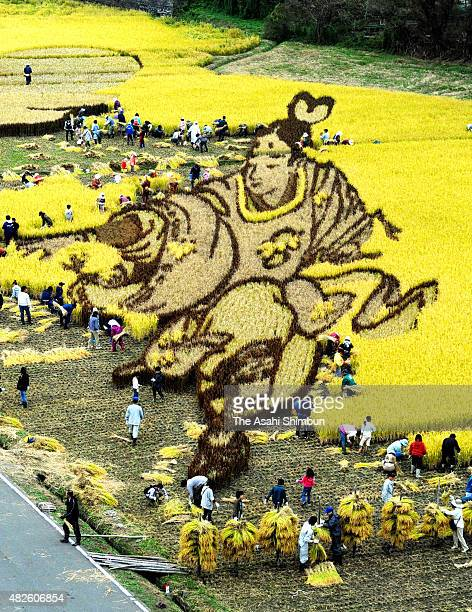 Volunteer workers harvest rice at the rice paddy art field on October 3 2010 in Inakadate Aomori Japan